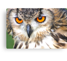 long-eared owl (Beautiful Orange Eyes) Canvas Print