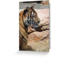 Standing Tiger Greeting Card
