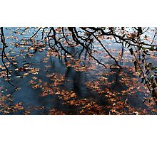 Oak Branch and Leaves in Frozen Lake Photographic Print