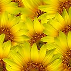 Sunflower Background  by bnilesh