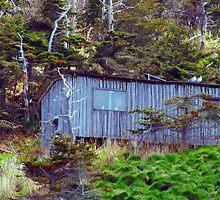 Puffin Island Shanty by Madeline M  Allen