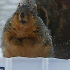 All about Squirrels 2011 by Jellybean720