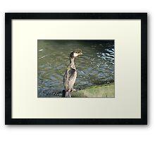 Cormorant -v- Sandeels Framed Print