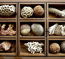 Corals, fossils, seeds and stones by Roz McQuillan