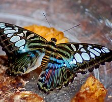The Butterfly by cherylc1