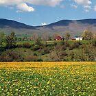 Springtime in Vermont by Judith Winde