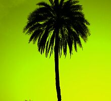 Coconut Tree by bnilesh