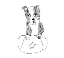 Sad Eyed Pup Photographic Print