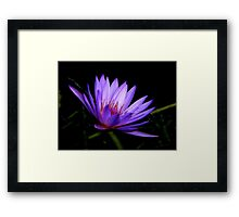 Dark Side of the Water Lily     Framed Print