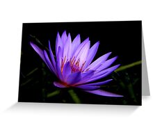 Dark Side of the Water Lily     Greeting Card