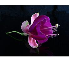 Fuchsia V Photographic Print