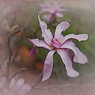 Magnolia Glow by Elaine Teague