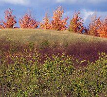 L. Mawby Winery, Leelanau Peninsula, MI by Amber Schiavone