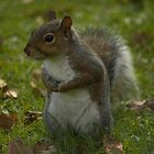 Hmmm where did i put that nut .... not the one with the camera by sootycat669