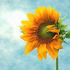 Sunflower by TrueBavarian