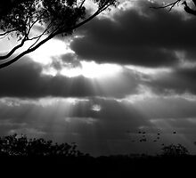 Rays of flight by augz