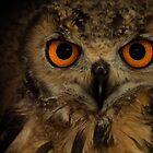 Eagle Owl Portrait by George Wheelhouse