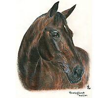 Thoroughbred stallion - head study Photographic Print