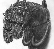 Horse team - Percherons by Petportraits