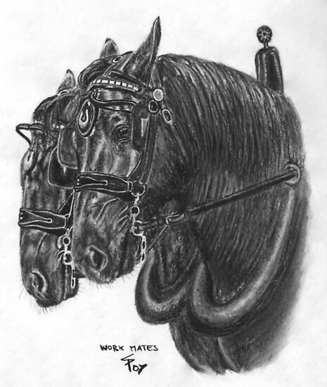Horse team - Percherons by Petportraits