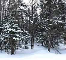 NC  Winter wonderland by Albert1000