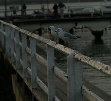 Evening Seagulls by LanaJaneBeck