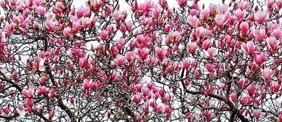 In Bloom by Ben de Putron