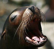 The song of a Sea Lion by Dolf