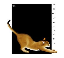 Cat Breeds: Abyssinian - Black Background by Martine Carlsen