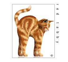 Cat Breeds: Red Tabby - White Background by Martine Carlsen