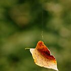 Hanging On by Debbie Bryant