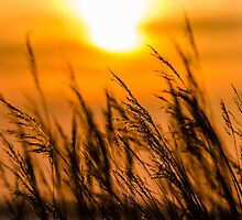 The Suns Golden Glow by Lee Wilson