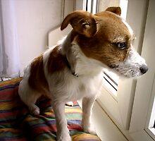 HOME ALONE DOG RUSSEL by SofiaYoushi