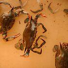 Got Crabs. by mscristal