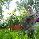 The Kitten and the Flower by atelier