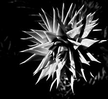 Spikey  by Paul Revans
