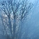 Winter Trees by Claire Elford