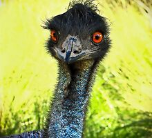 An Australian Emu by SuzieCheree