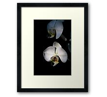 White orchids Framed Print