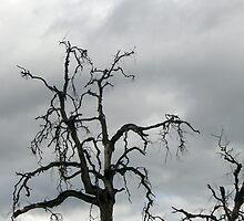 Desolation by channeled