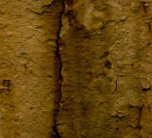 Paint Decay Texture 4 by wetdryvac