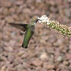 Hummingbird  by aaronson24