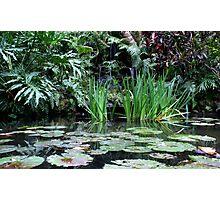 Reflecting Pond Photographic Print