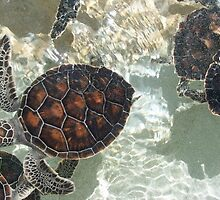 Baby Sea Turtles by LindaR