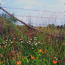 WV fence by Sandra Hopko