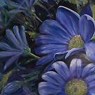 Daisy Blue by picketty