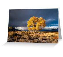 Still fall Greeting Card
