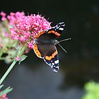 Butterfly Briefly Seen at Sneem by Larry149