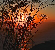 Sunset flower by Gosha Davis