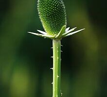 Green by cdwork